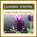 Natural grown Lavenders are insects beloved