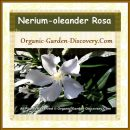 White single Nerium-oleander