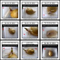 Growing potato in water project