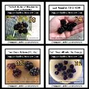 Freeze the berries when they are totally ripe and in shining black