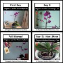 Growing orchids from day 1 to the day 51.