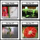 Growing poppies in a greenhouse from day 1 to day 77.