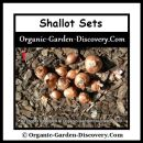 Growing shallots start with sets.