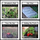Use small black plastic containers to hold the strawberries can avoid the slugs and snails; and keep the berries clean.