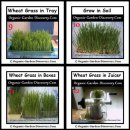 You can grow wheat grass indoor with plastic containers of water or soil. Use a green power wheat grass juicer to juice the grass.