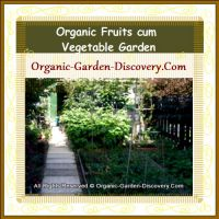 Our organic fruits and vegetables garden in spring 2009.