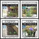 Dutch Iris bulbs were blooming in 2 different locations on the day 101 and the day 107