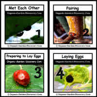 Look for Lady bug as it is one important organic garden pest control insect.