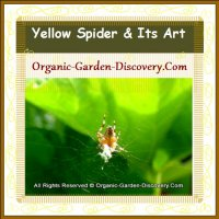 A baby yellow spider is throwing out its silky thread.