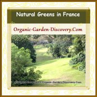 Pure, calm and peaceful evergreens landscape garden in France
