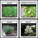 Potato plants are growing from the day 57 to the flowering day 77.