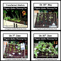 Fruits and vegetables development from the day 2 to the day 24