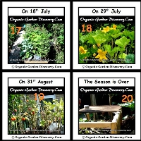 Continous harvest of fruits and vegetables during mid-July to Early September