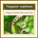 Three strips of mini light pink flowers from Polygonum-amphibium