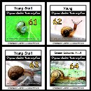 Different states of young snails with different colours and designs of shells