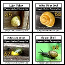 Snail shells colours from light yellow to dark yellow to gold and silver