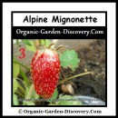 Alpine type of strawberry is sweet and tender.