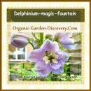 Soft purplish blue Larkspur flowers when placed in the a strong and consistant sunlight will turn into darker blues