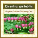 A line of pink sweet hearts blossoms for your front yard landscape