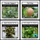 Providing supports to the apple tree; and soon the nice coloured full size apple appeared.