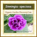 Gloxinia is a summer bloomer