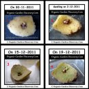 Growing potato skin from day 1 to day 19.