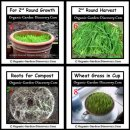After second round wheat grass growth and harvest; you may put all the roots into your compost bin.