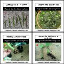 Learn how to grow grape vines from cuttings in summer