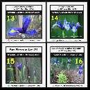 Six irises were expanding from the day 178 to 180