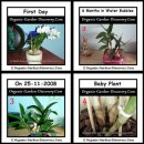 Dendrobium orchids plant care from day 1.