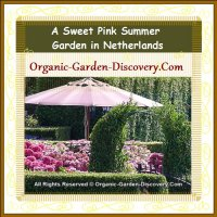 A sweet pink open air afternoon tea garden in Netherlands.
