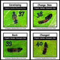 Insects are in the progress of changing colours and designs