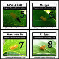 Different numbers of eggs from different Lady bugs.