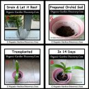 Transfer a healthy baby orchid plant to a small pot of orchid soil.